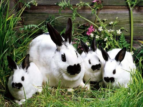 可愛い動物の画像が貼られるスレ-046_1