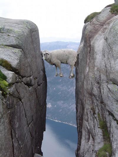 画像加工出来る人、羊さんを助けて-038