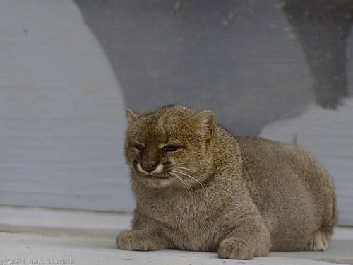 可愛い動物の画像が貼られるスレ-037_2