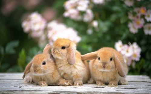 可愛い動物の画像が貼られるスレ-064_3