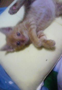 子猫を拾った話をする 画像もつける-039_2