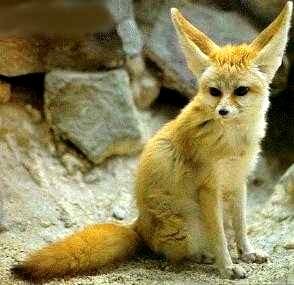 狐の画像ください-062_7
