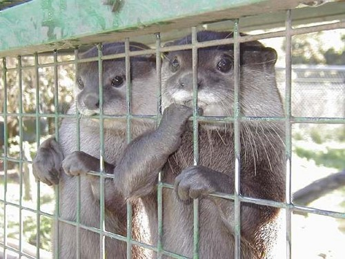 可愛い動物の画像が貼られるスレ-022