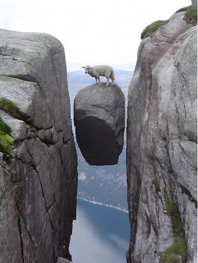 画像加工出来る人、羊さんを助けて-022