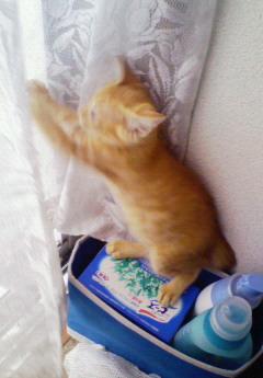子猫を拾った話をする 画像もつける-078_4