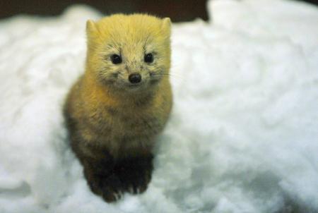 狐の画像ください-032