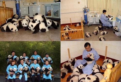 可愛い動物の画像が貼られるスレ-069