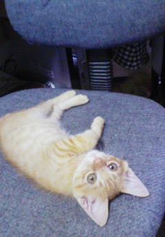子猫を拾った話をする 画像もつける-078_2