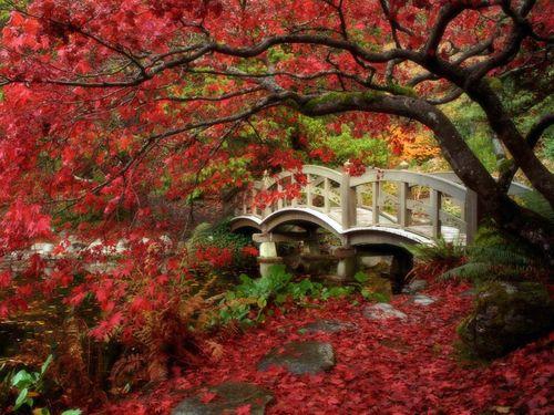 日本の綺麗な画像を貼っていこう-034_2
