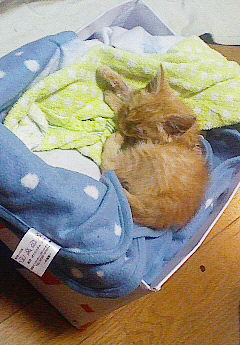 子猫を拾った話をする 画像もつける-027
