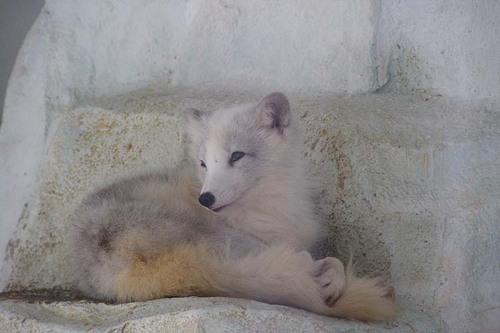 狐の画像ください-056