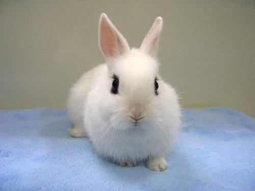 可愛い動物の画像が貼られるスレ-040_1
