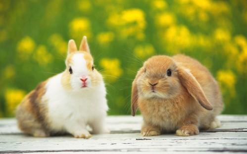 可愛い動物の画像が貼られるスレ-002