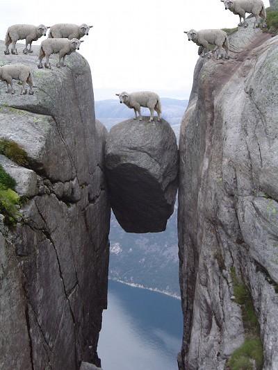 画像加工出来る人、羊さんを助けて-016