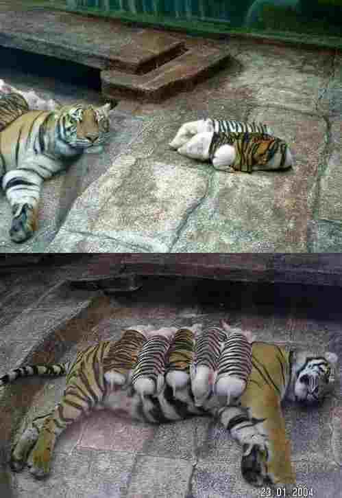 動物の子供の画像をはるスレ-033