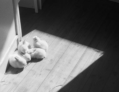 可愛い動物の画像が貼られるスレ-065_2
