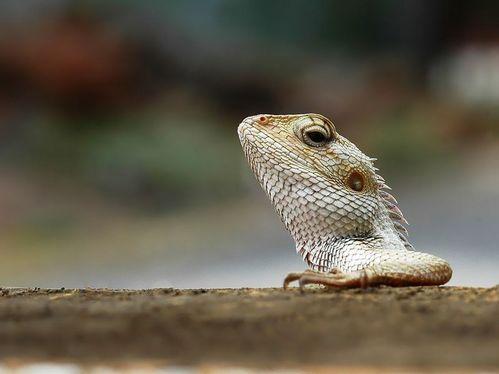 可愛い動物の画像が貼られるスレ-017_2
