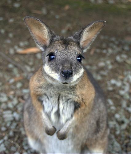 可愛い動物の画像が貼られるスレ-025_2