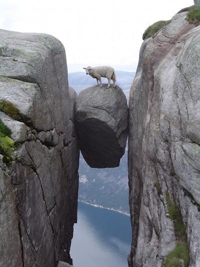 画像加工出来る人、羊さんを助けて-001