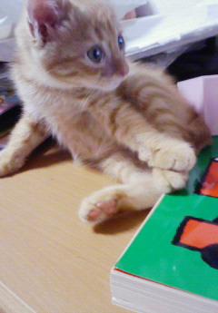 子猫を拾った話をする 画像もつける-055_1