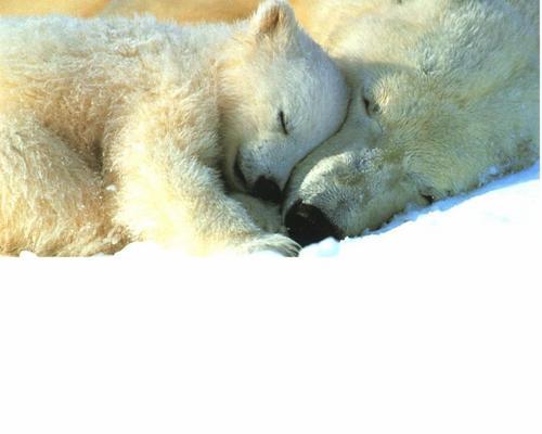 可愛い動物の画像が貼られるスレ-039_2