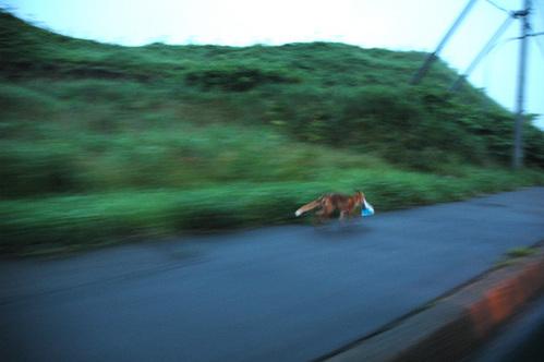 狐の画像ください-125_2