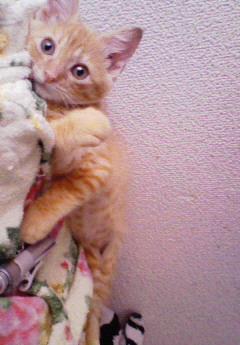 子猫を拾った話をする 画像もつける-072_2
