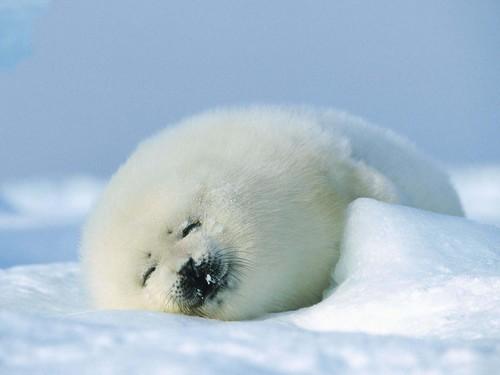 可愛い動物の画像が貼られるスレ-019