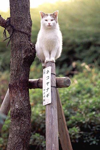 可愛い動物の画像が貼られるスレ-058_3