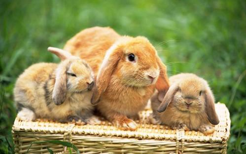可愛い動物の画像が貼られるスレ-064_1