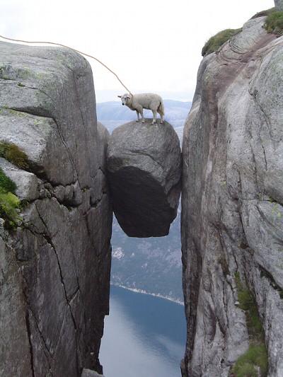 画像加工出来る人、羊さんを助けて-045