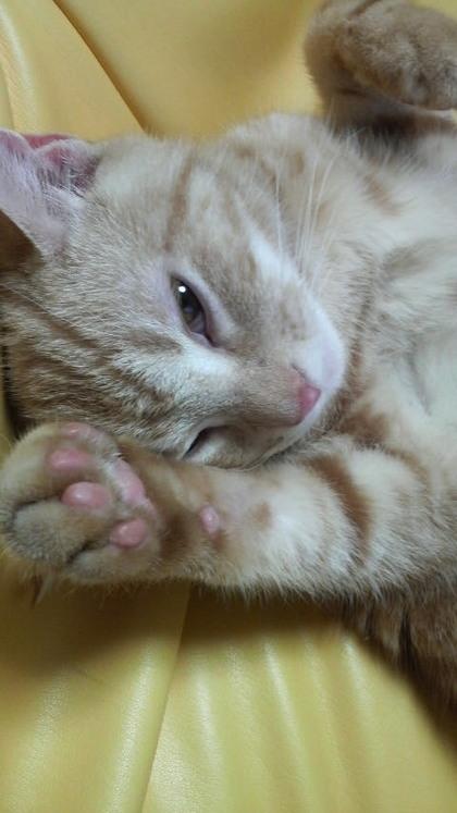 ネコの画像ください-016