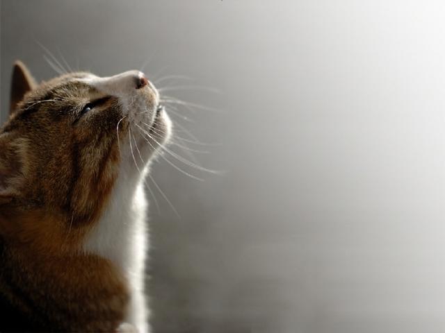 カッコいい猫の画像-112