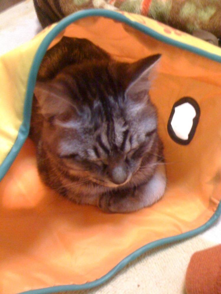 猫が袋に入ってる-077