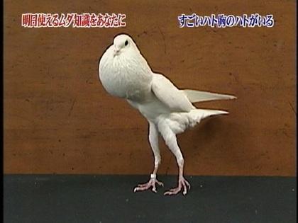 鳥の画像ください-069_2