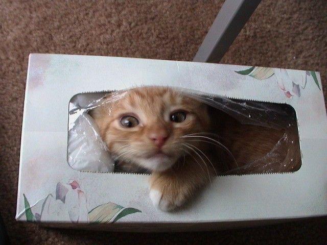 猫が袋に入ってる-041