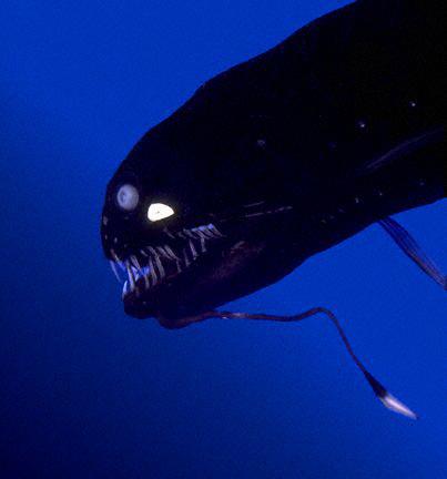 海に住む奇妙な生き物の画像-038_3