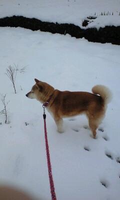 柴犬、秋田犬画像スレ-026