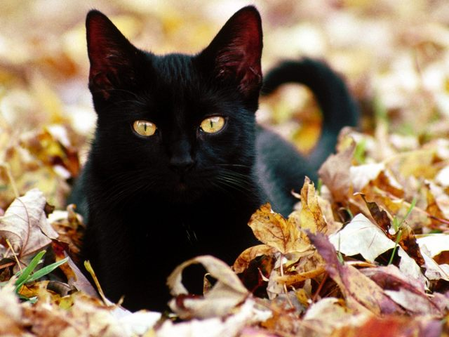 カッコいい猫の画像-107