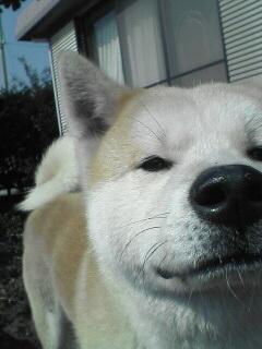 柴犬、秋田犬画像スレ-119
