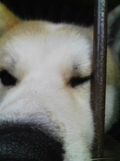 柴犬、秋田犬画像スレ-099
