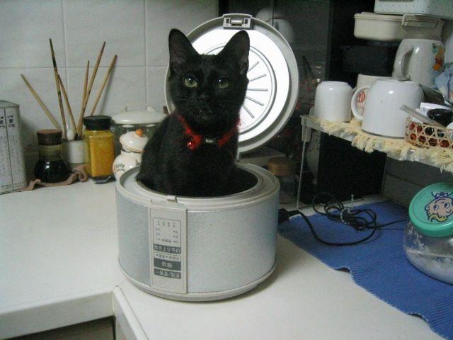 猫が袋に入ってる-048