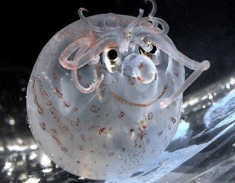 海に住む奇妙な生き物の画像-041_1