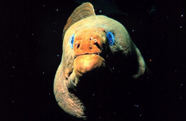 海に住む奇妙な生き物の画像-054_2