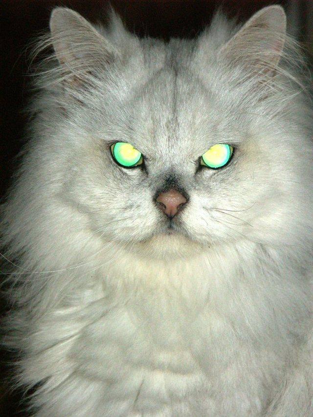 カッコいい猫の画像-119