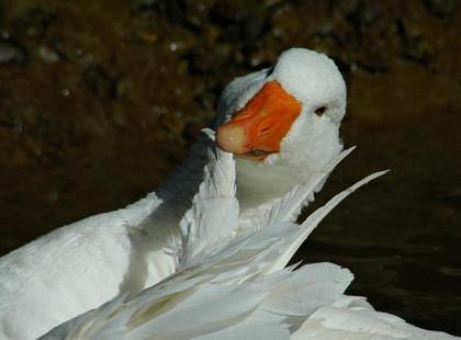 鳥の画像ください-039_2