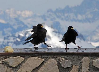 鳥の画像ください-036_4