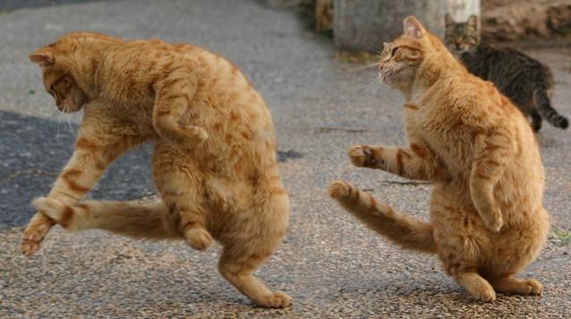 カッコいい猫の画像-044