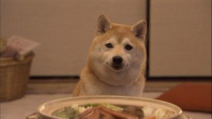 柴犬、秋田犬画像スレ-077