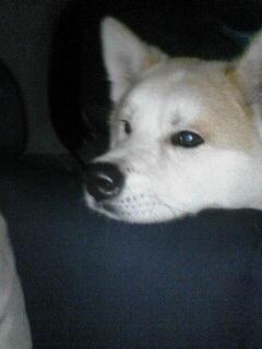 柴犬、秋田犬画像スレ-122